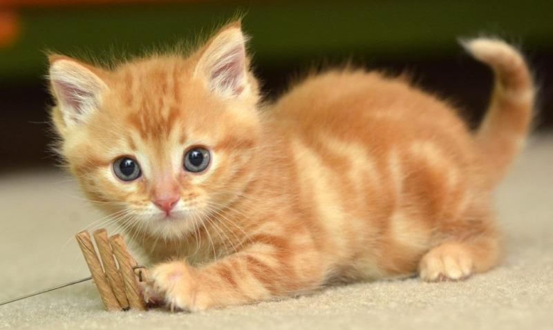 Mơ thấy mèo báo điềm gì?