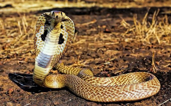 Mơ thấy rắn chui vào ống tre hay trúc