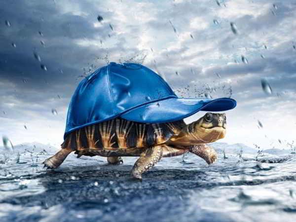 Khi nằm mơ thấy rùa đánh con gì