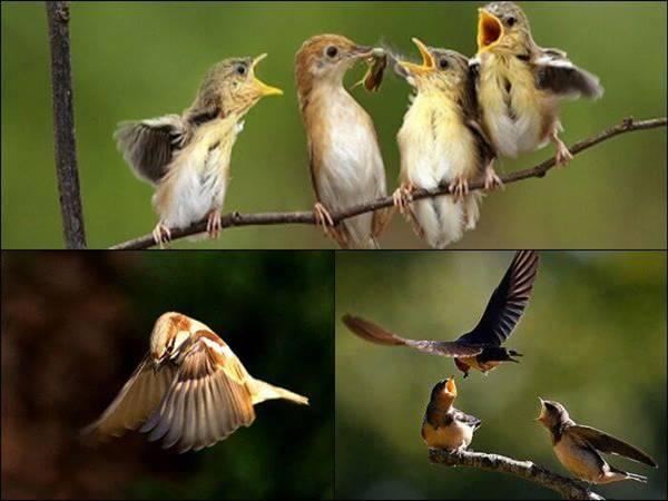 mơ thấy chim đánh con gì